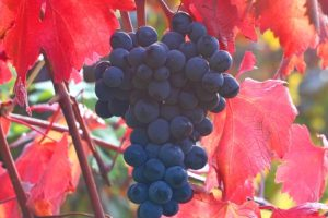 AGLIANICA WINE FESTIVAL 2010 8-9-10 Ottobre a Venosa