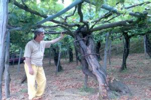 """Fregoni interviene sul """"vino biologico"""""""