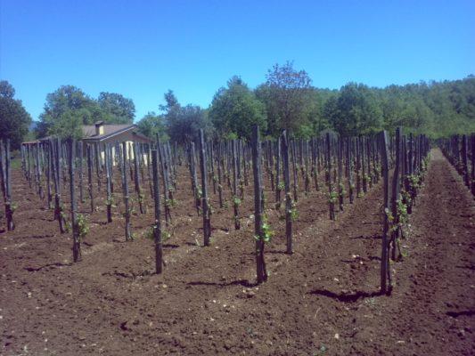 Le sorprese degli antichi vitigni Lucani