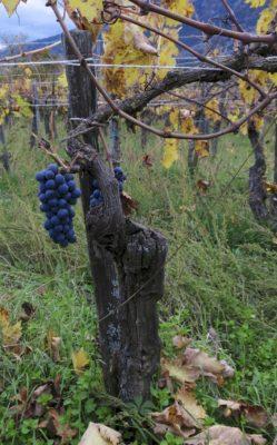 "Il Manifesto del ""vino artigianale"""