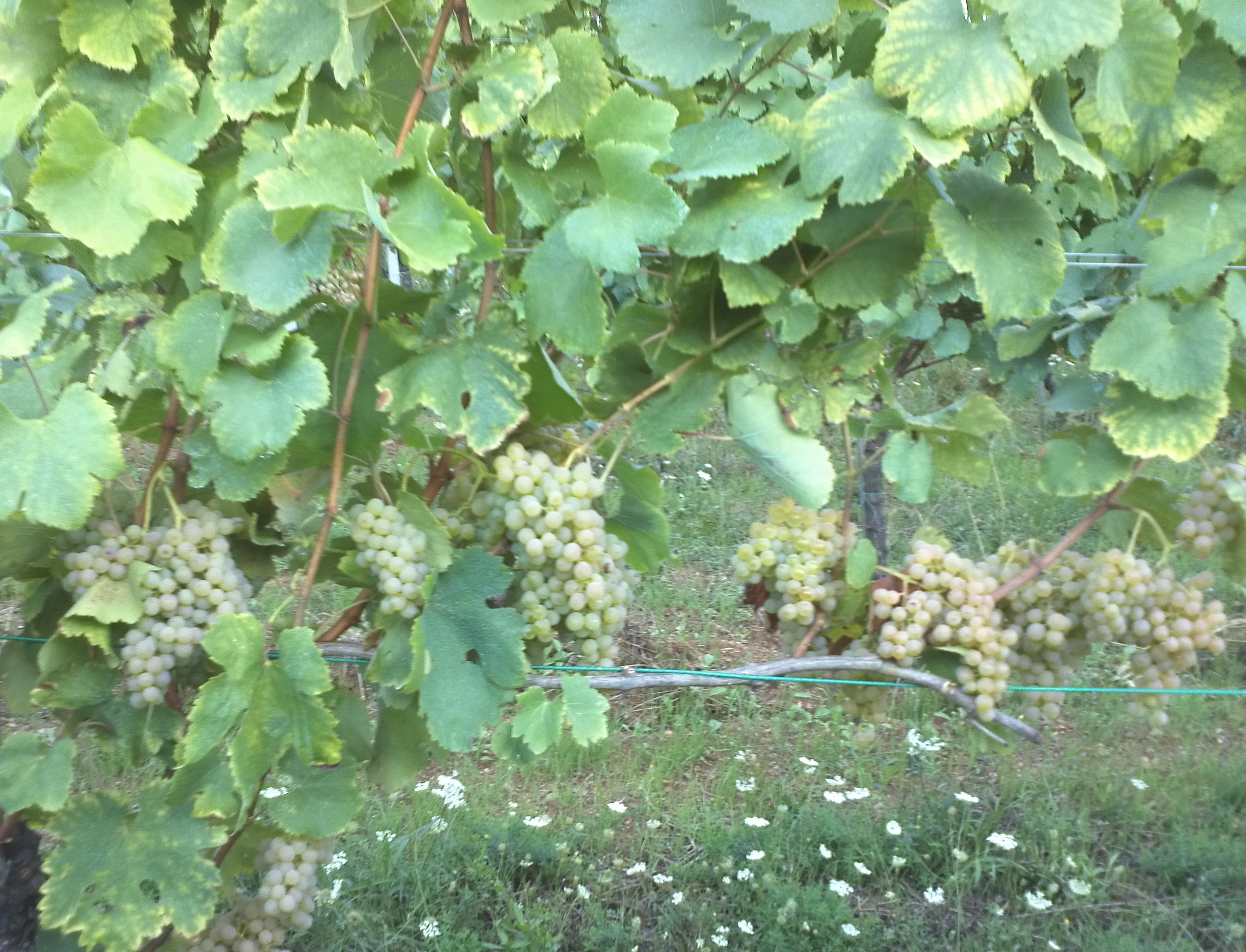 Fiano in Val d'Agri