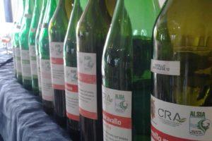 Ricerca sui vitigni autoctoni lucani
